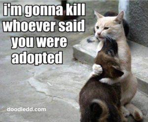 Cat comforting Dog