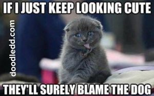 "Meme-Kitten says ""If I just keep looking cute they'll surely BlameTheDog1"""