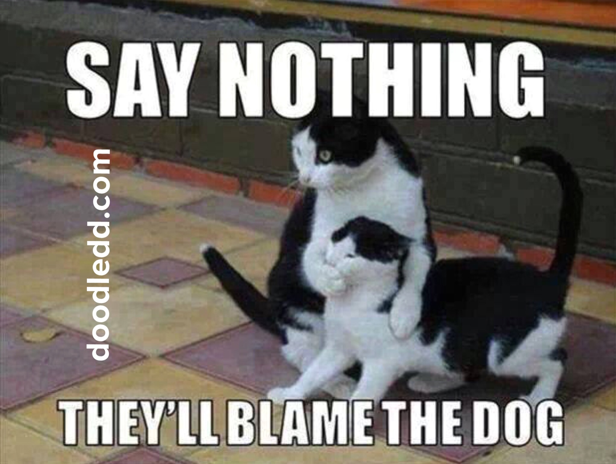 "Cat tells kitten ""Say nothing they'll BlameTheDog"""