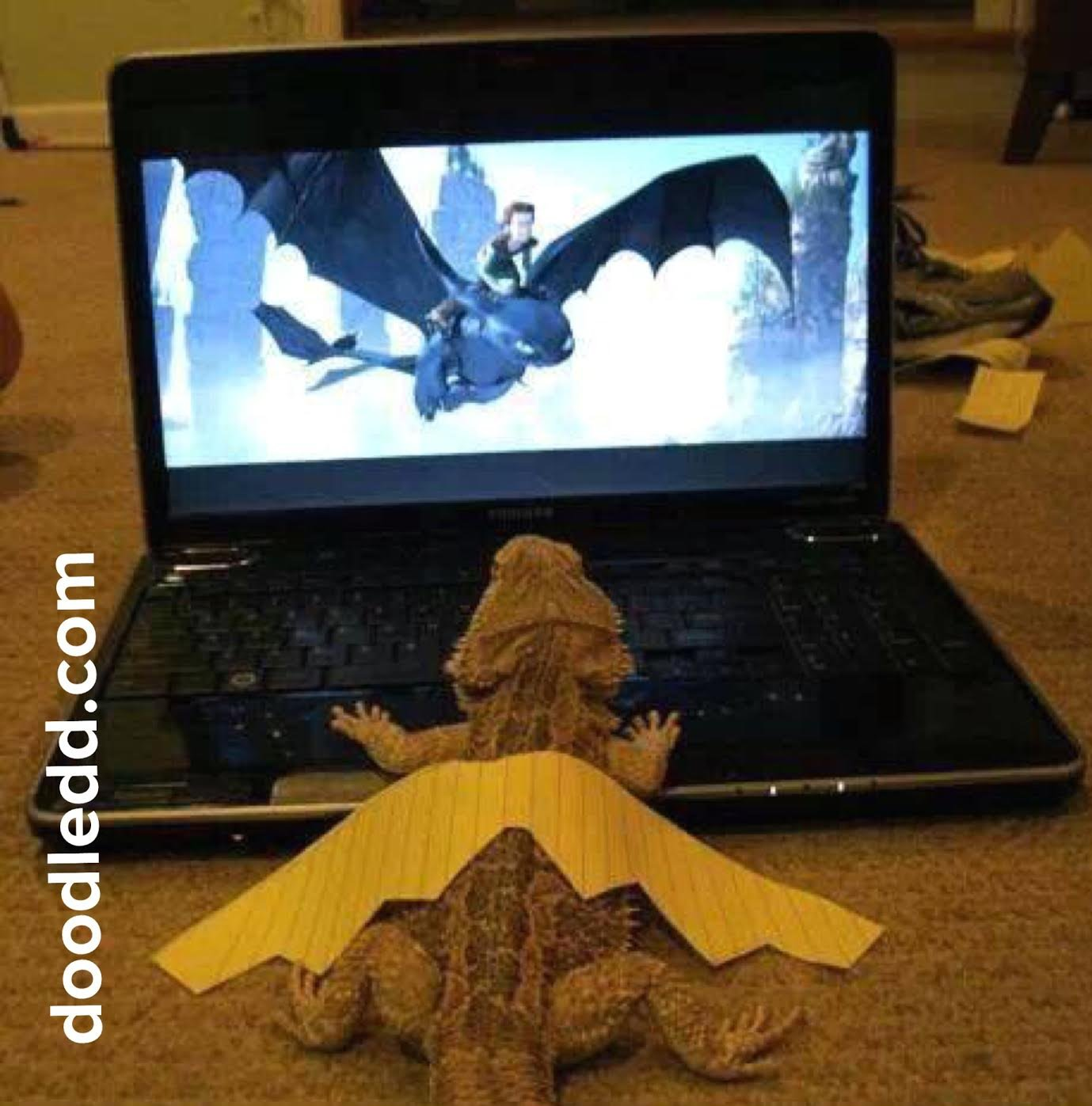 Baby Dragon watching a DragonCam on a laptop