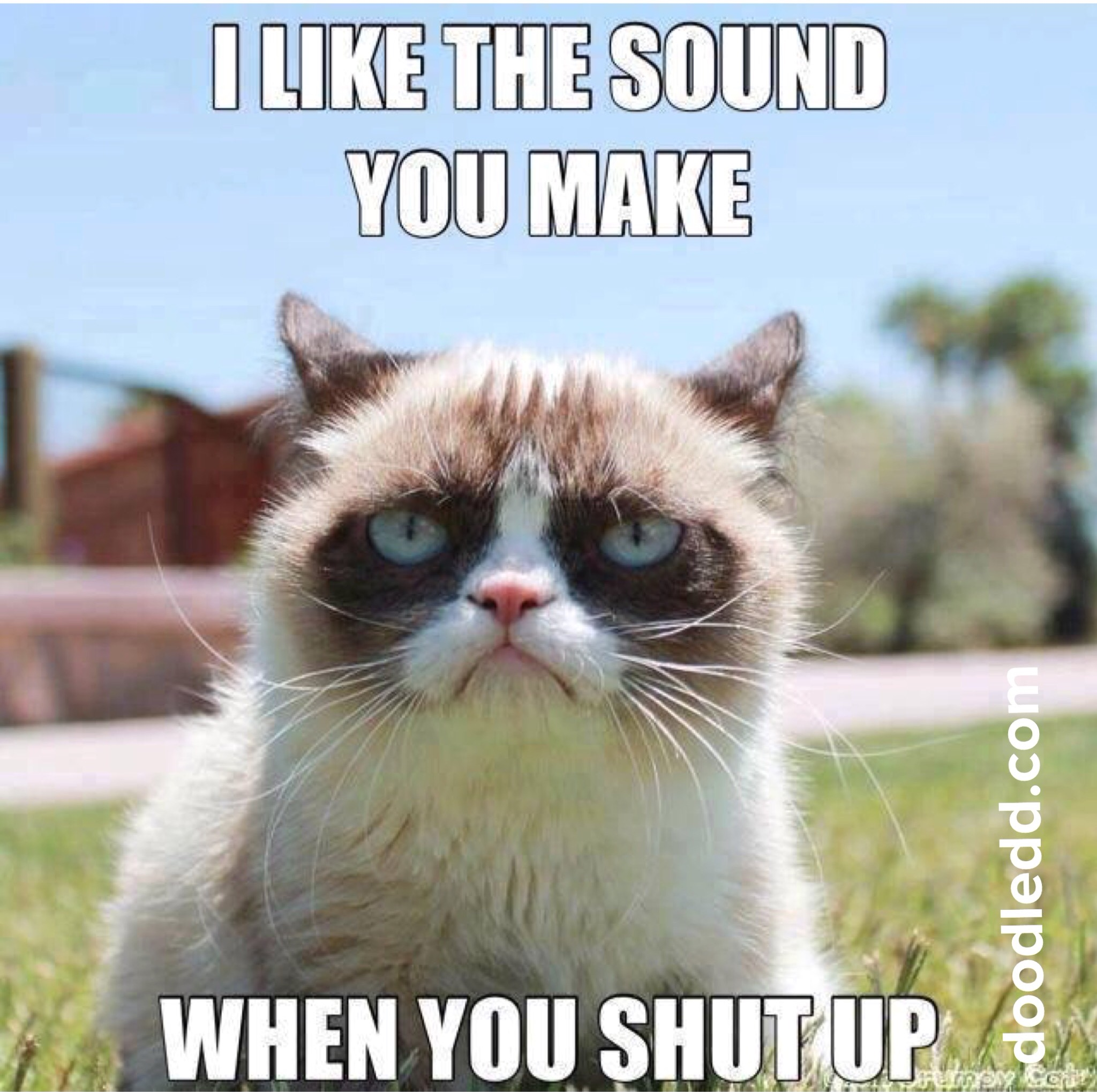 "Grumpy Cat says ""I like the noise you make when you shut up"""