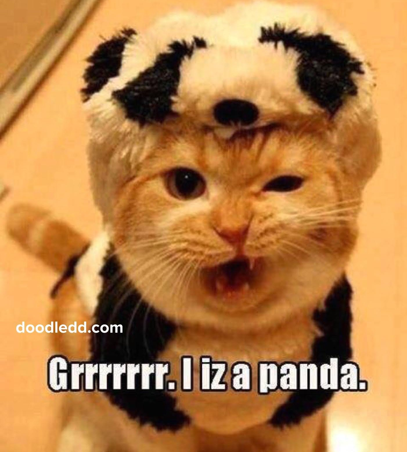 "Cat in a costume says ""Grrrrrrr. IizaPanda."""
