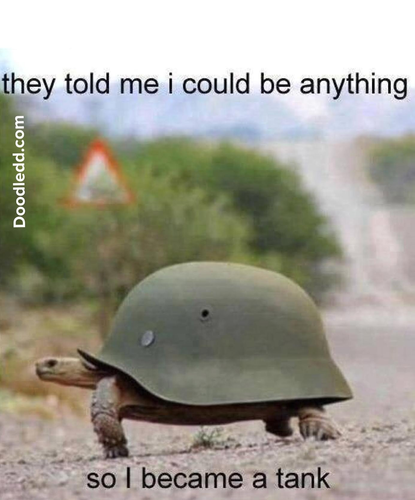 "Turtle with a military helmet for a shell says ""they told me I could be anything so I became a tank"