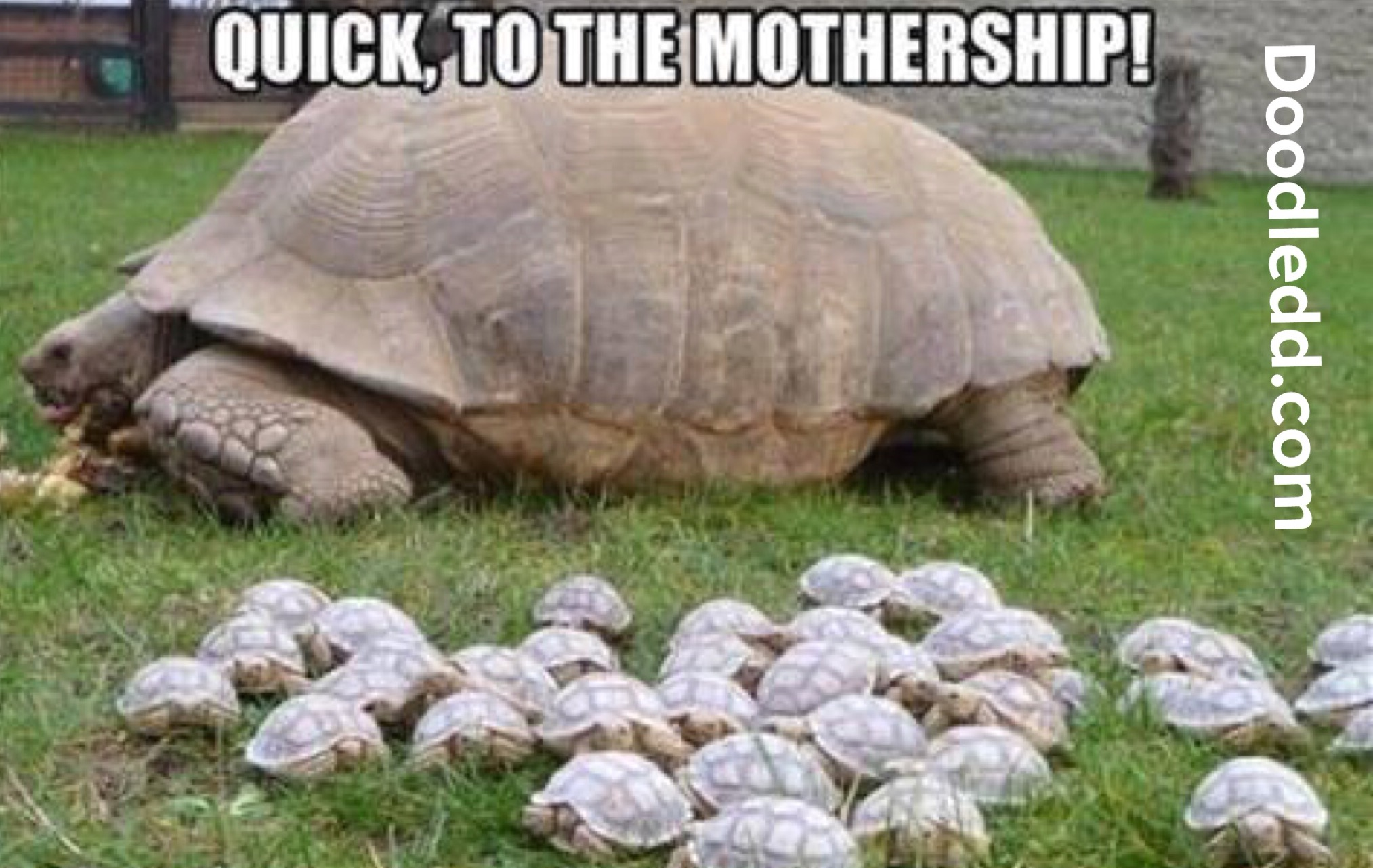 Baby Turtles running to mom - ToTheMothership